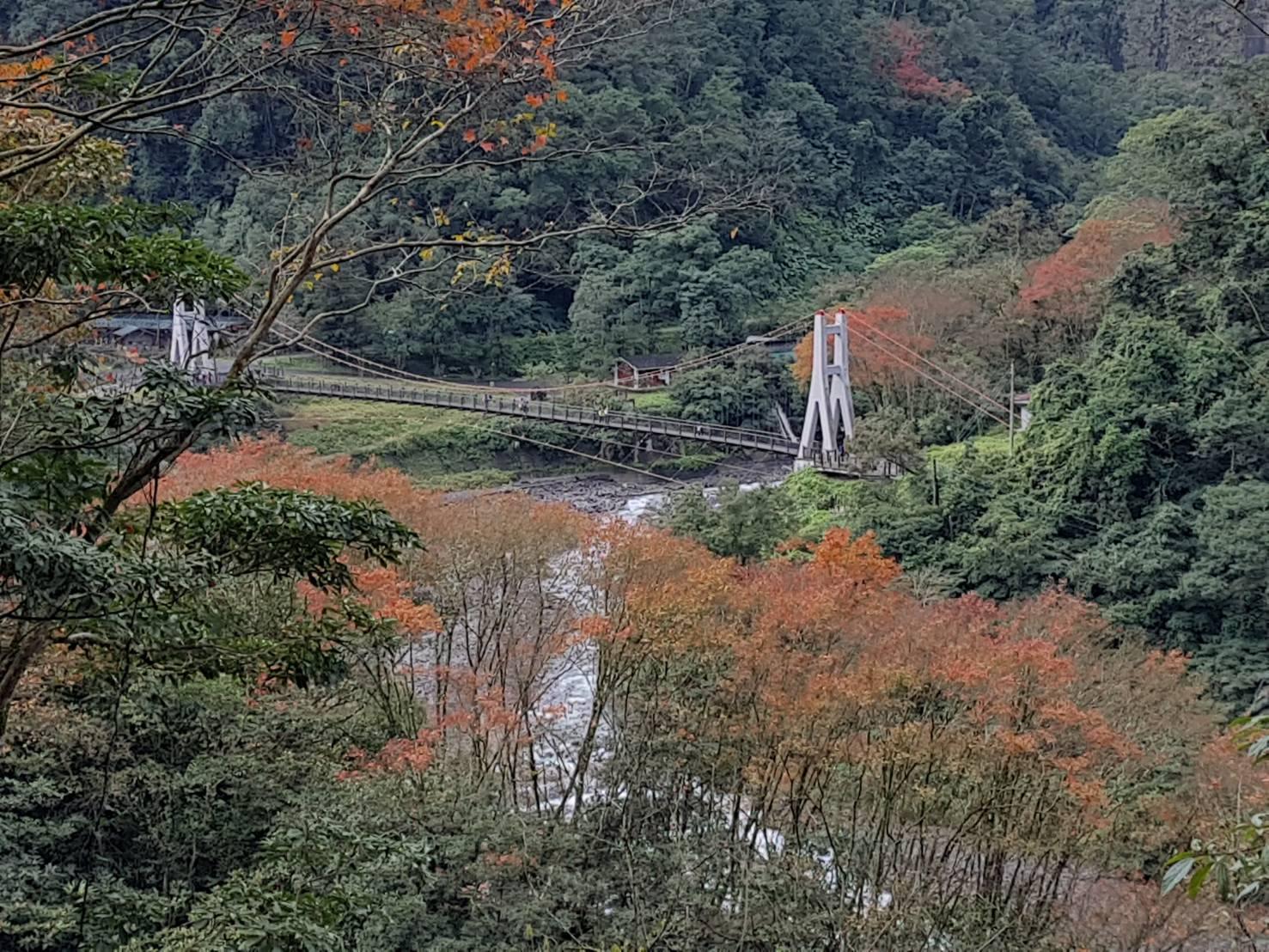 鳩之澤自然步道冬日限定之楓紅美景 (照片由羅東林區管理處提供)