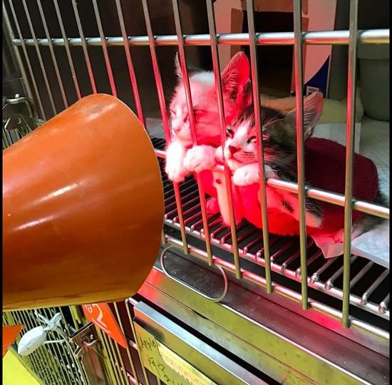 貓咪取暖照片(翻攝自台南市動保處官網)