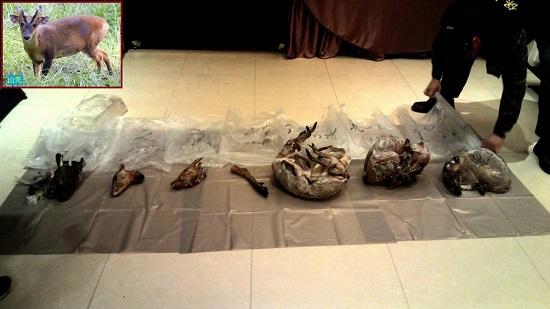 警方與台北市動保處17日在遭投訴餐廳冰庫中,發現包含山羌(左上圖)在內的保育類野生動物屠體。農委會林務局提供