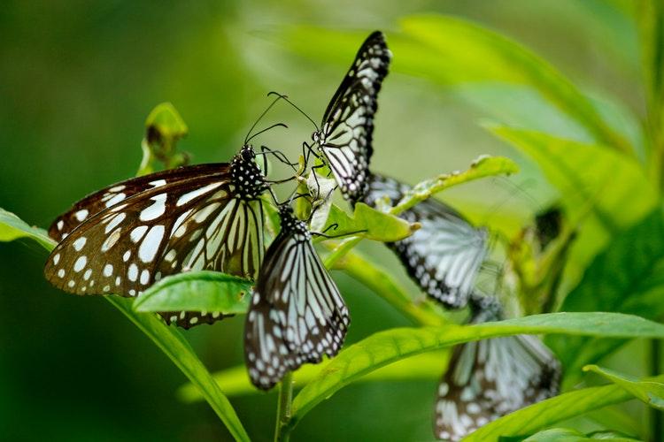 taiwan possess amazing diversity of butterfly taiwan news