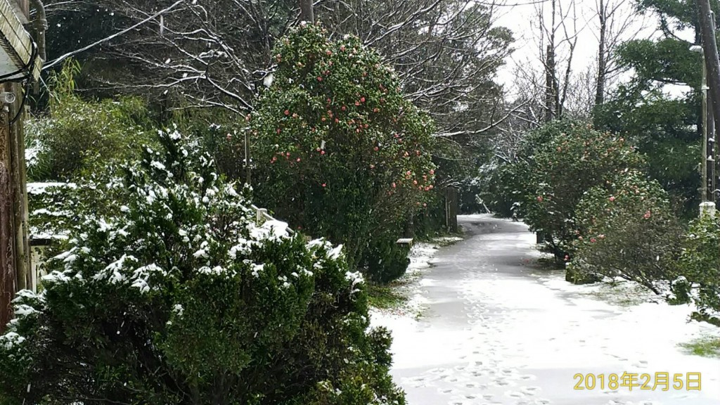 大屯山鞍部氣象站5日上午9點0分雪況(圖片提供:中央氣象局)