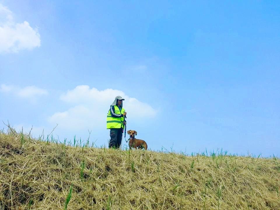 臺灣蒙斯特農研有限公司的火蟻偵測犬示意圖(圖片來源:截取自蒙斯特農研有限公司網站)