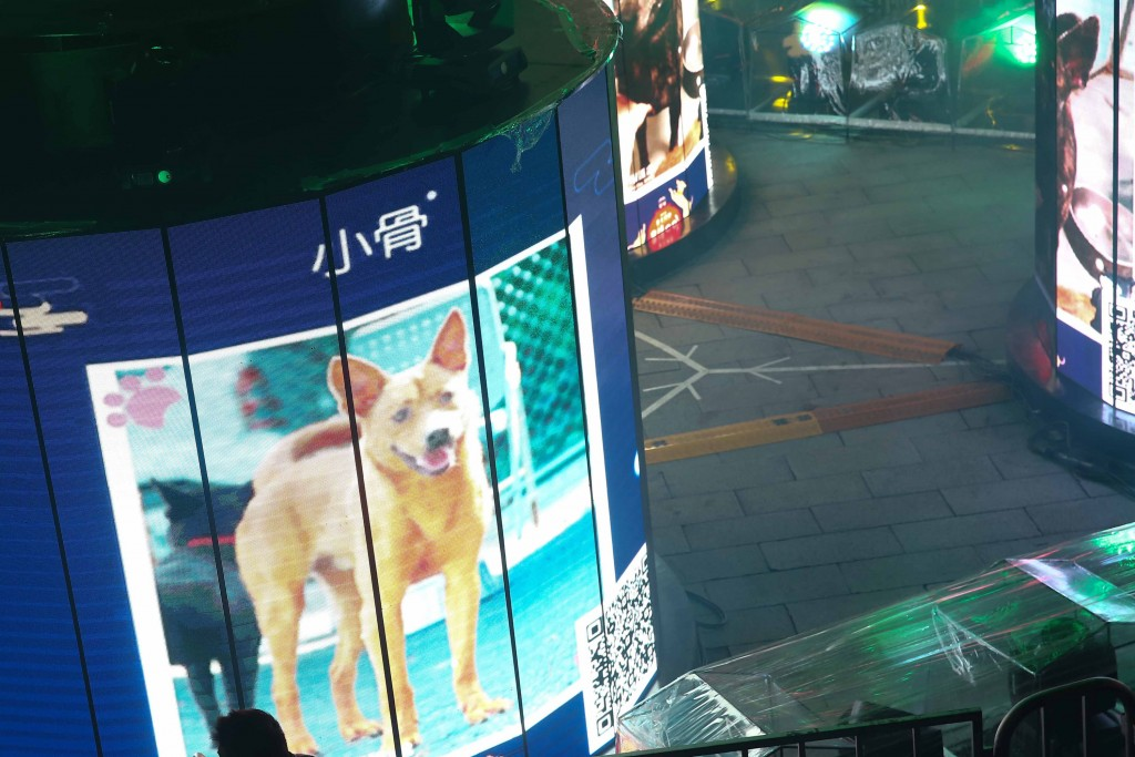The Taipei Lantern Festival wants to help stray dogs.
