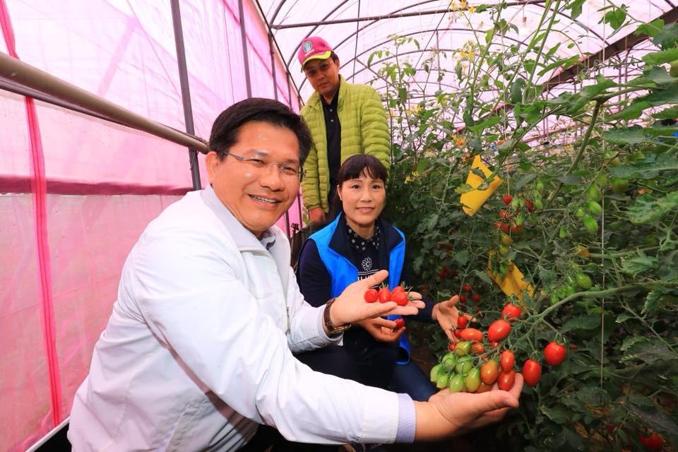 中國籍配偶求援,臺中市長林佳龍指示農業局到果園輔導種植 (圖片來源:台中市政府提供)