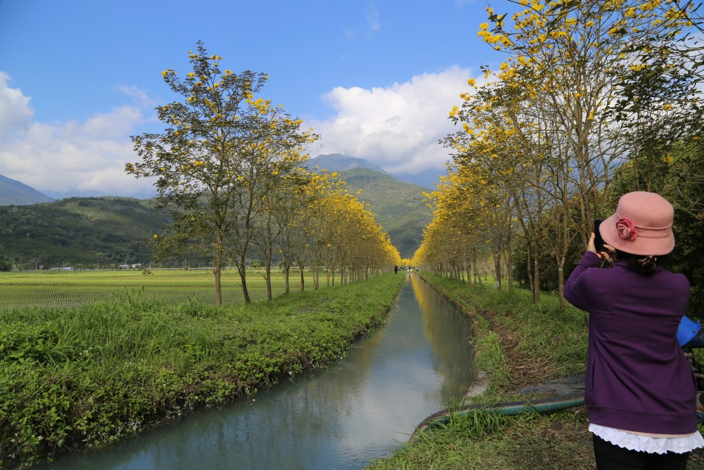 Golden trumpet trees originated in South America.