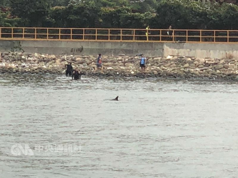 Autopsies of beached whales in southern Taiwan reveal sickness