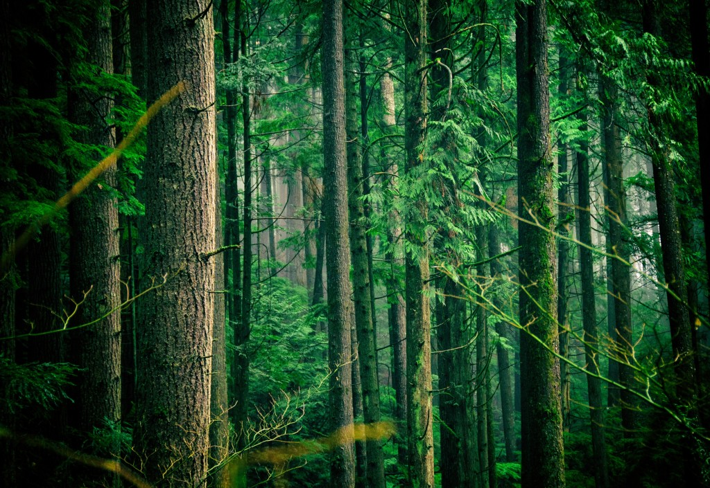 Arbor Day has been observed around the world since the early 19th century.  (Image from Unsplash)