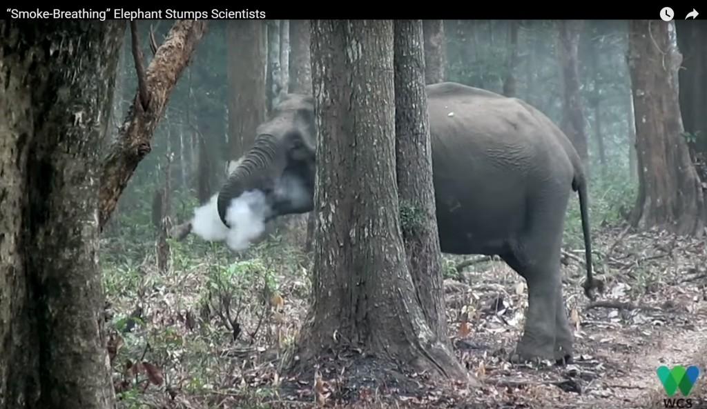 照片擷取自Wildlife Conservation Society的youtube。