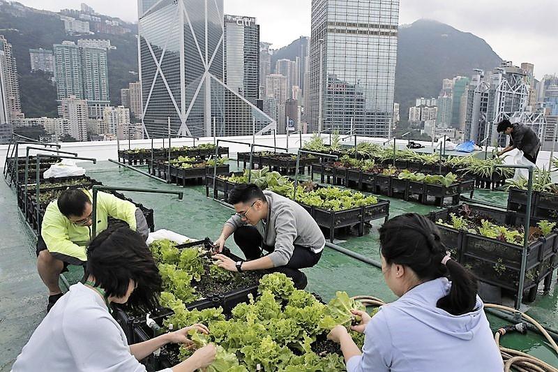 香港美銀中心屋頂農園(圖片/美聯社)