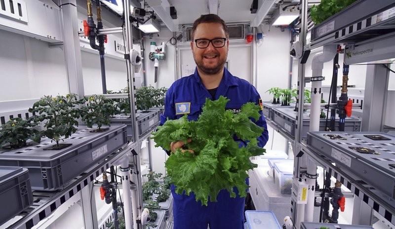 南極科學家開心收割首批綠色蔬菜(圖/美聯社)