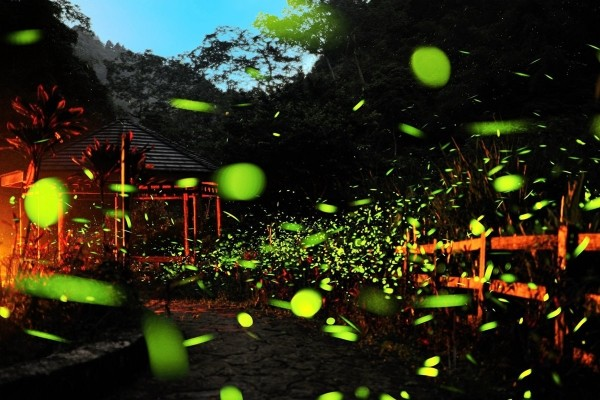 Fireflies in Chiayi.