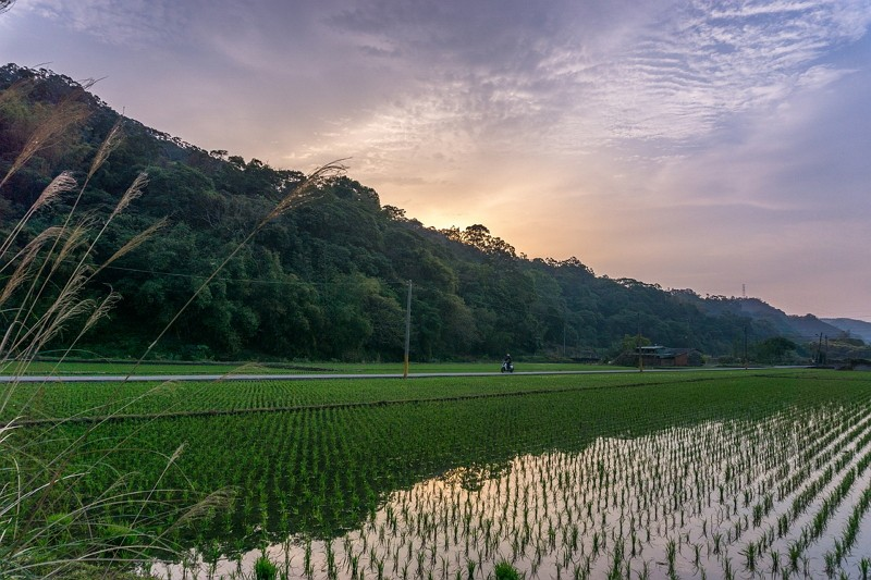 a rice paddy in Taiwan (image by Pixabay)