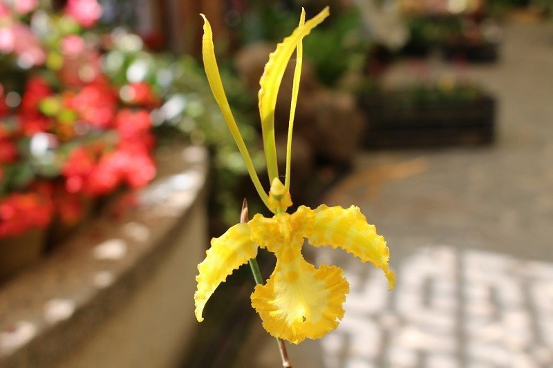 "20-day 'Dancing Orchid Show"" at Taipei's Shilin Official Residence kicks off May 1"
