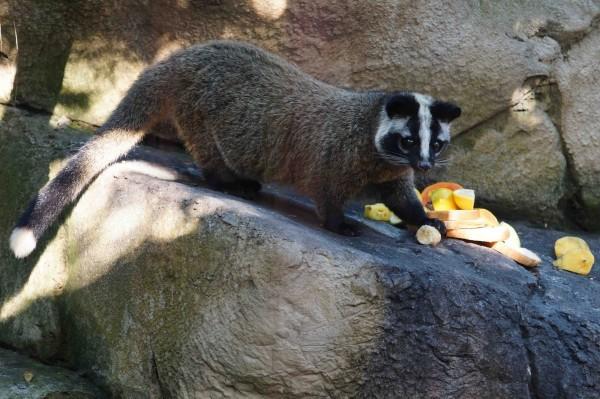 圖片來源:台北市動物園