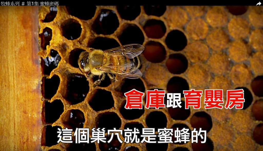 圖片擷取自林務局之「森活情報站」頻道之「牧蜂系列」第1集 蜜蜂密碼。