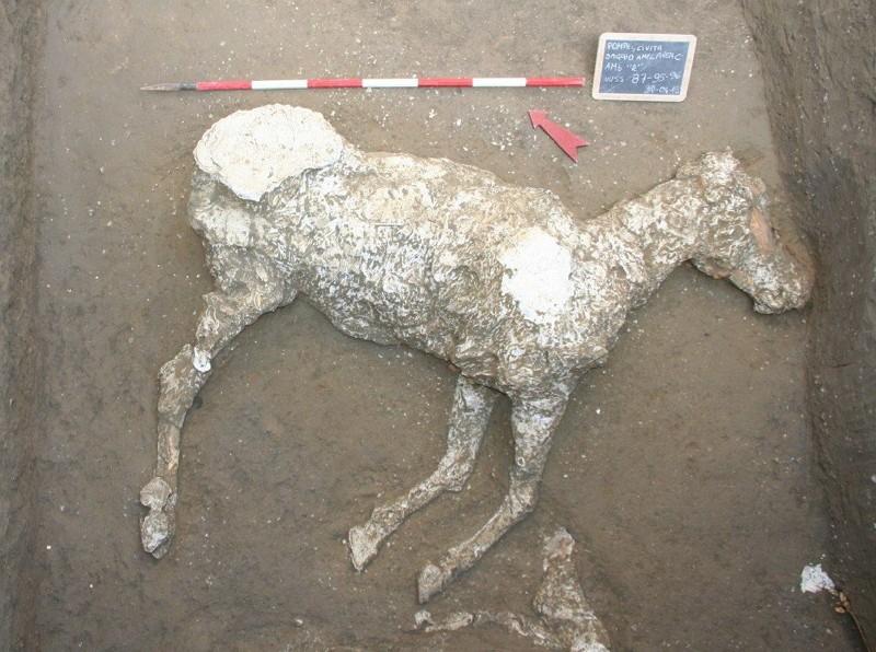 考古學家以石膏鑄造技術重現龐貝遺址馬匹遺骸(圖/臉書Pompeii - Parco Archeologico)