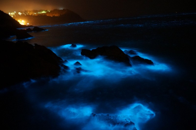 A mesmerizing picture of Matsu's famous 'blue tears' (Photo by Facebook 馬祖愛趴GO)