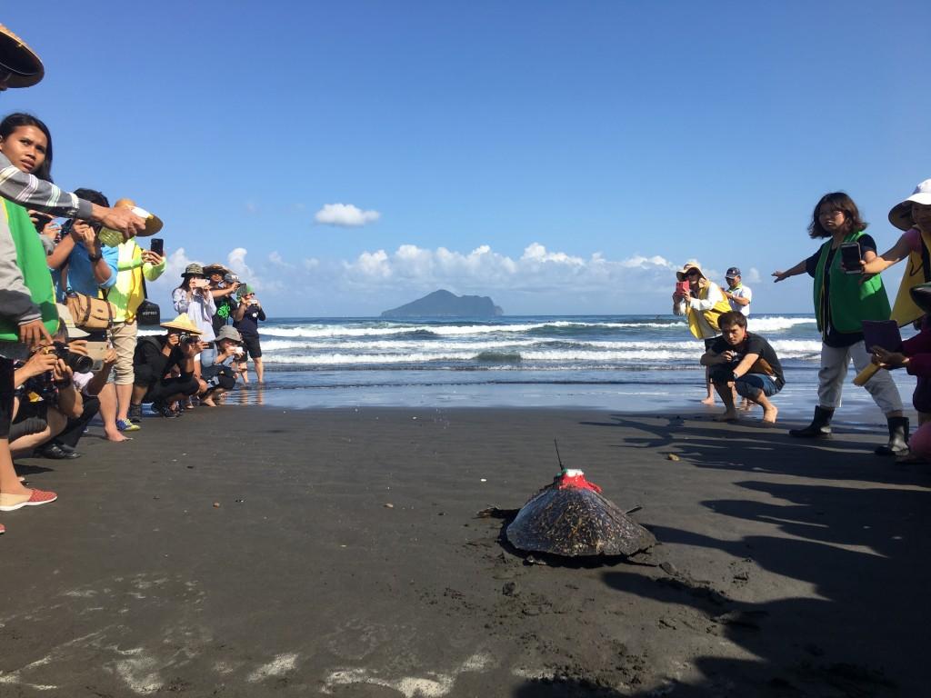 岱瑁「魷魚絲」於3月29日野放。(照片由林務局提供)
