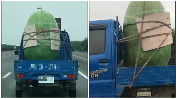 Giant melon. (Photo from Breaking News Commune)