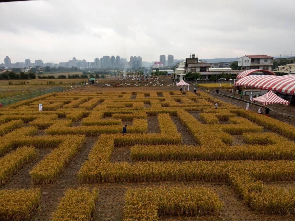 稻田迷宮。(照片由農糧署北區分署提供)