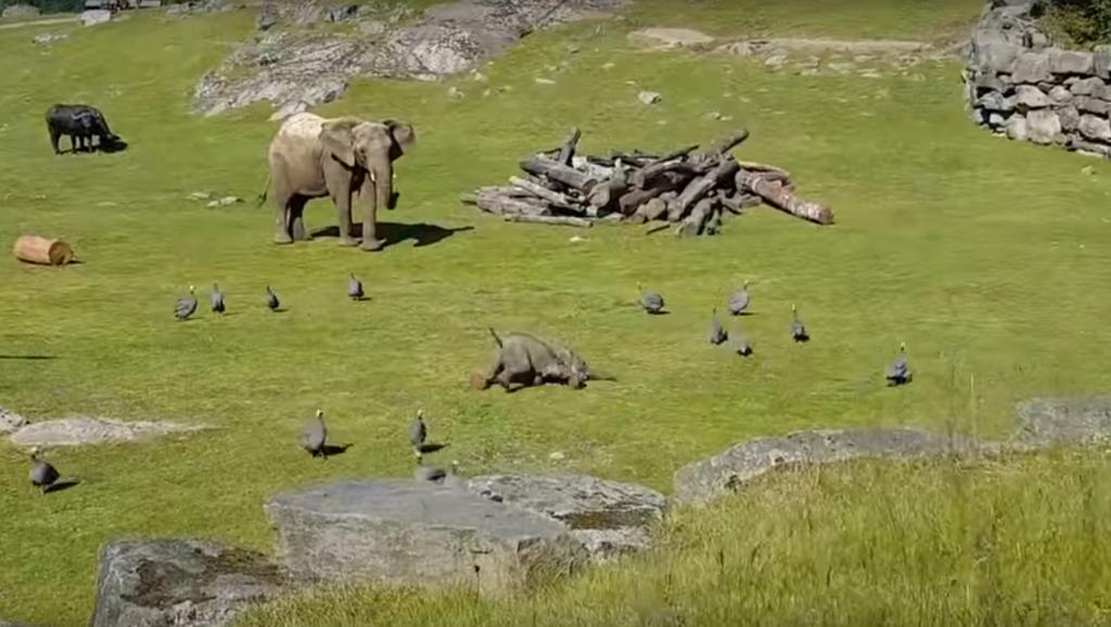 圖片擷取自RM Video 的 Baby elephant chasing birds.