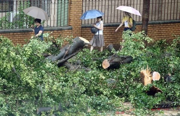 Fallen trees in Taipei City.