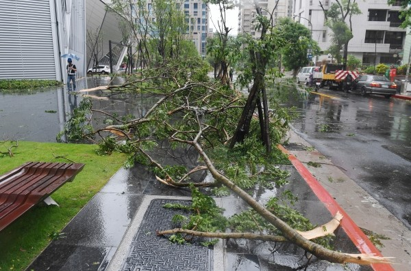 Fallen branches on Taipei street.