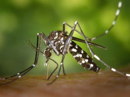 New Taipei City reports cluster of dengue fever (photo from Pixabay).
