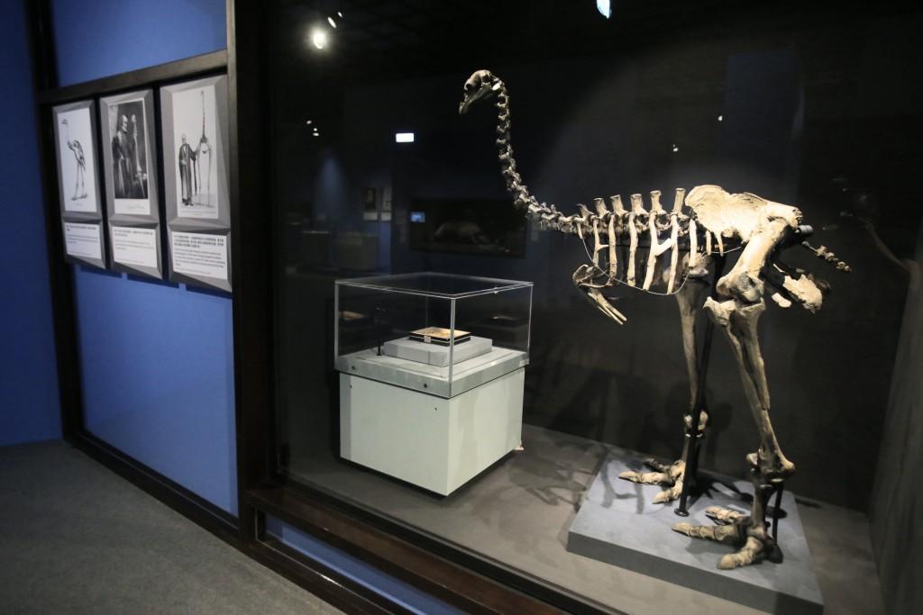英國自然史博物館首度來台開展(照片圖供:聯合數位文創)