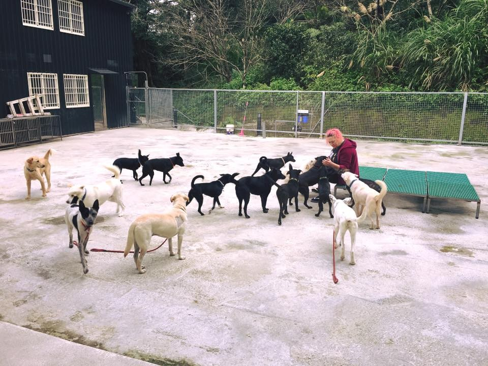 Liza Milne at a dog shelter (Image used with permission)