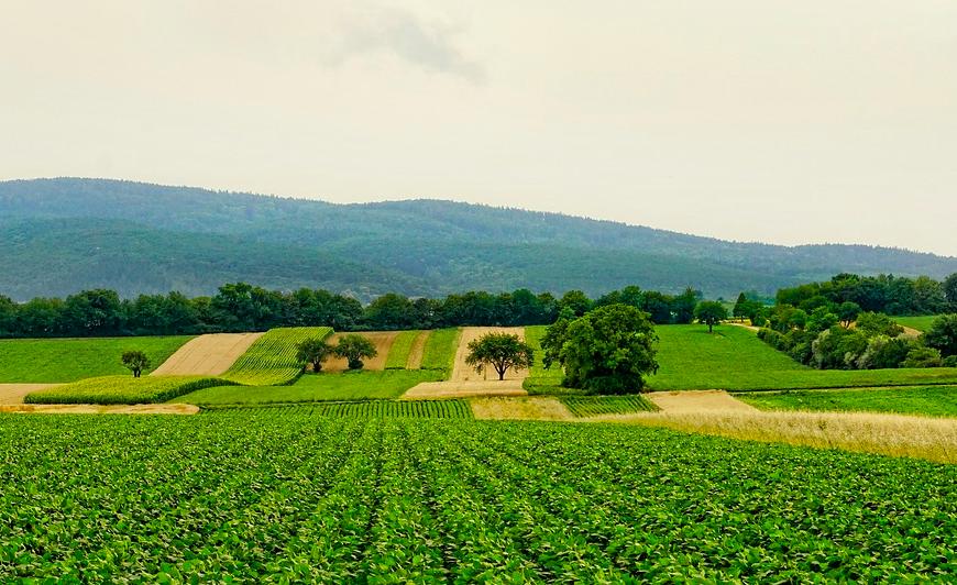我國將至菲律賓設農業示範區(照片來源:pixabay)