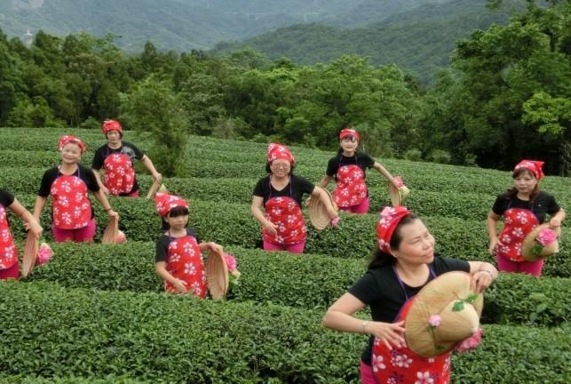 石碇樂齡中心特色—茶舞 (新北市政府教育局提供)