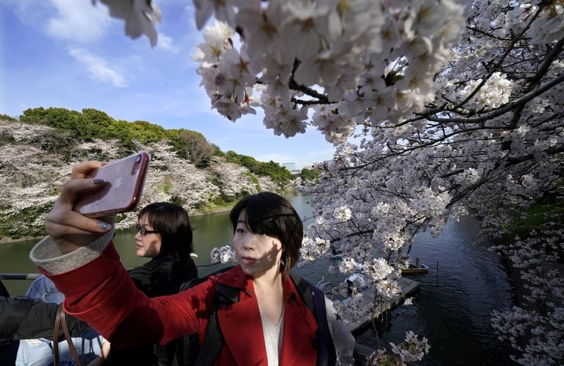 Tourists with Japan's famed cherry blossoms.