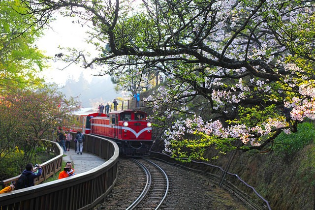 Alishan Forest Railway (Flickr user: Jerry Lai)