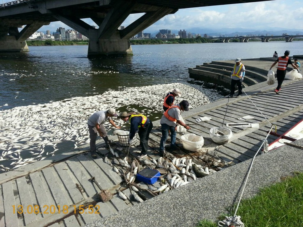 Dead fish being cleared from the Tamsui River. (Image courtesy of Water Resources Department)