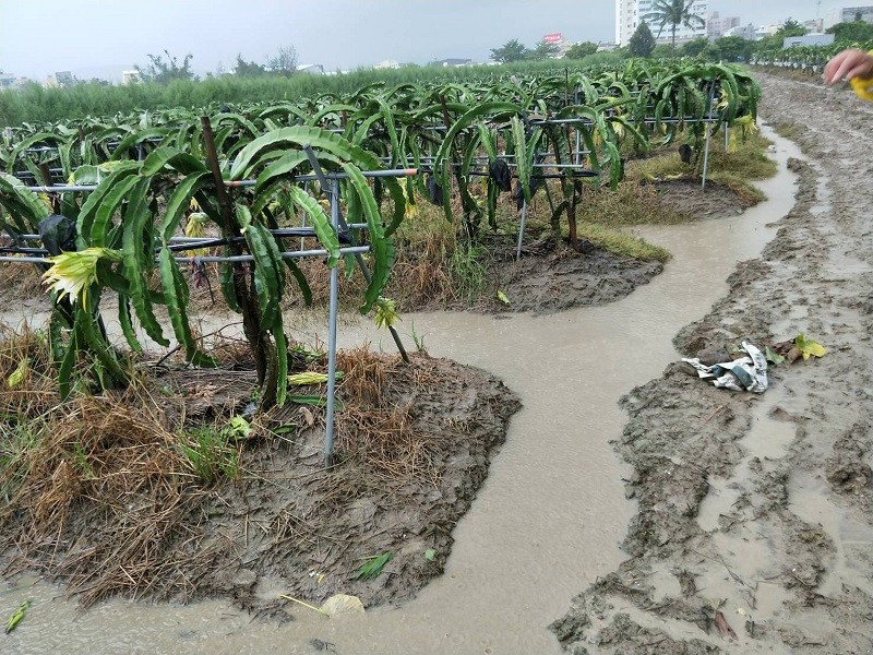 (photo courtesy of Pingtung County Government)
