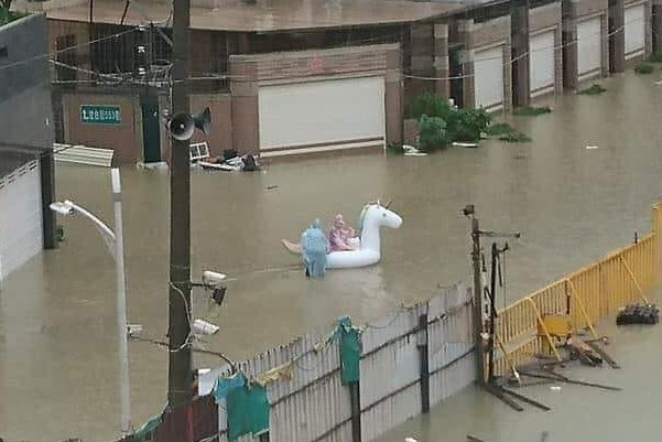 White unicorn spotted in Kaohsiung. (Photo from爆料公社)