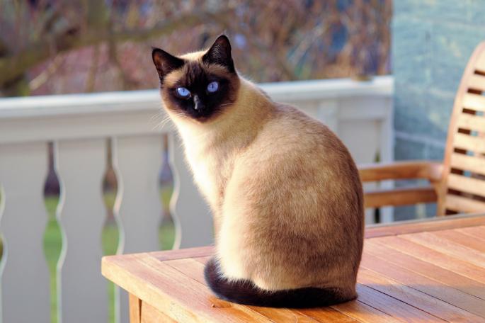 一隻可愛貓咪(翻攝自Pexels)