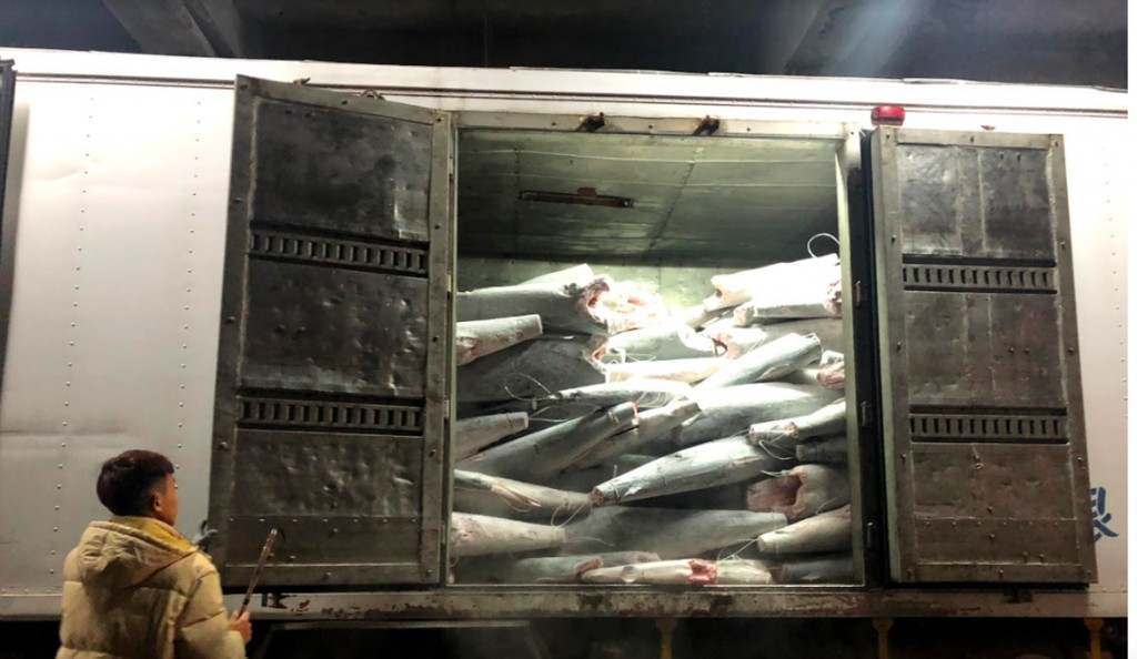 Over 30 tons of contraband shark meat. (Image courtesy of Fisheries Agency)