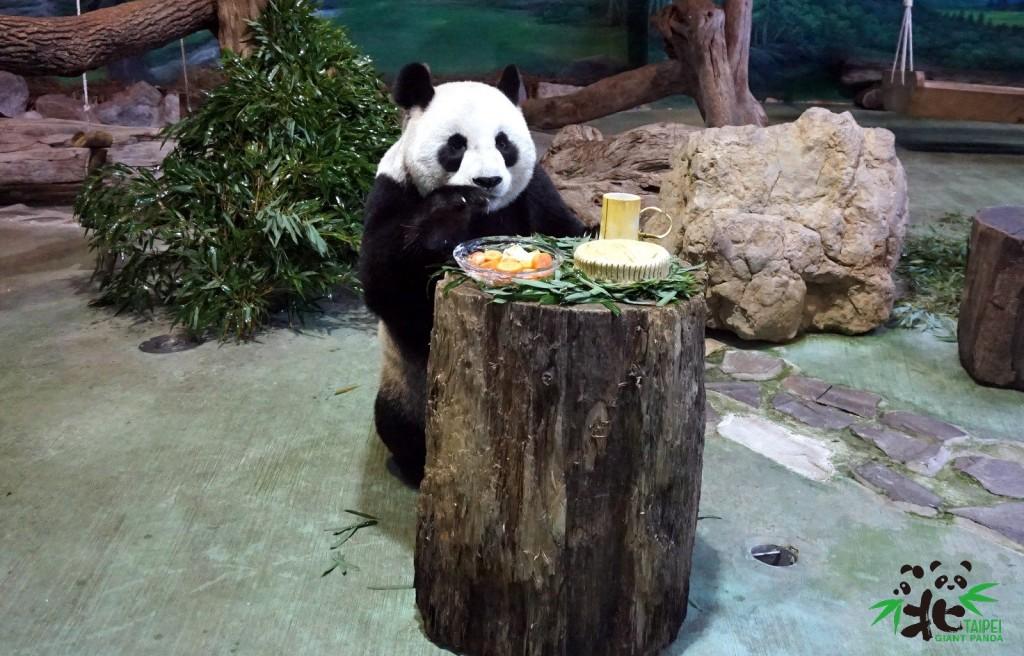 Panda enjoying a mooncake at Taipei Zoo.  (Image courtesy of Taipei Zoo)
