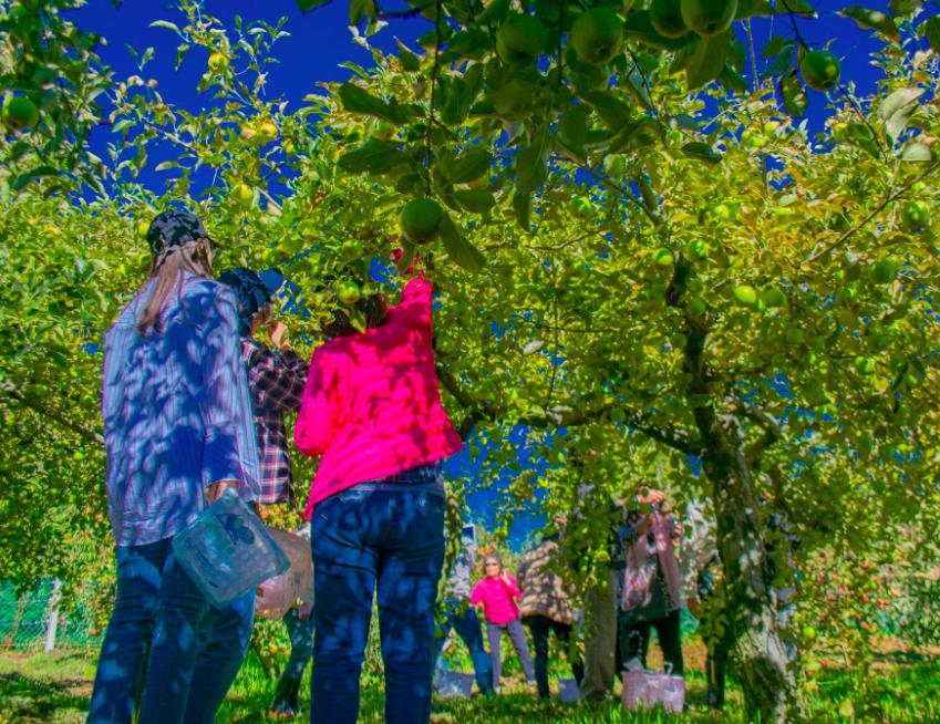 福壽山及武陵農場皆於10月祭出體驗活動(照片來源:福壽山農場)
