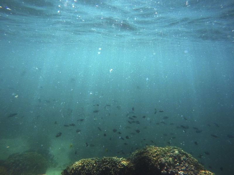 Fish swim over a patch of bleached coral in Hawaii's Kaneohe Bay off the island of Oahu. (AP)