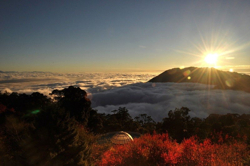 A sea of clouds and red maple leaves on Dasyueshan (photo courtesy of Dongshih Forest District Office)