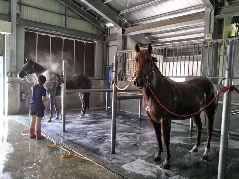 馬盥洗場所(圖/衛福部)