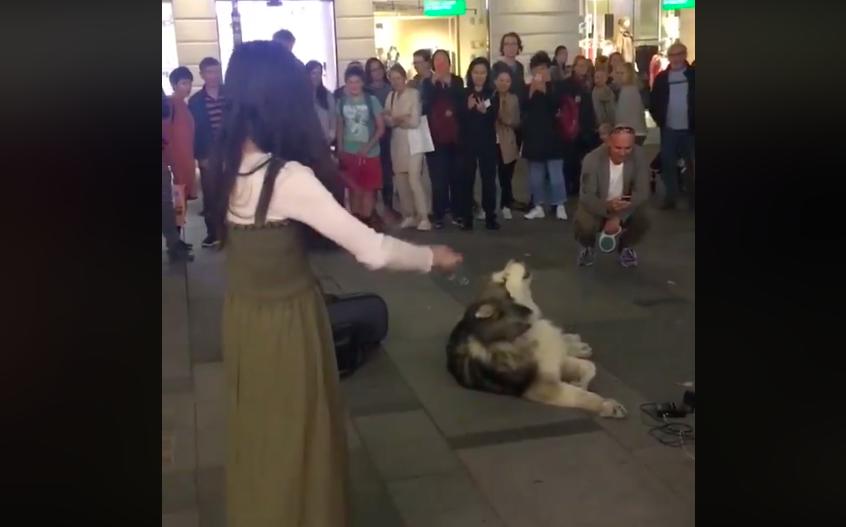 台女奧地利街頭演奏小提琴,吸引圍觀群眾及哈士奇伴奏(圖擷取自Christina Krawec臉書)