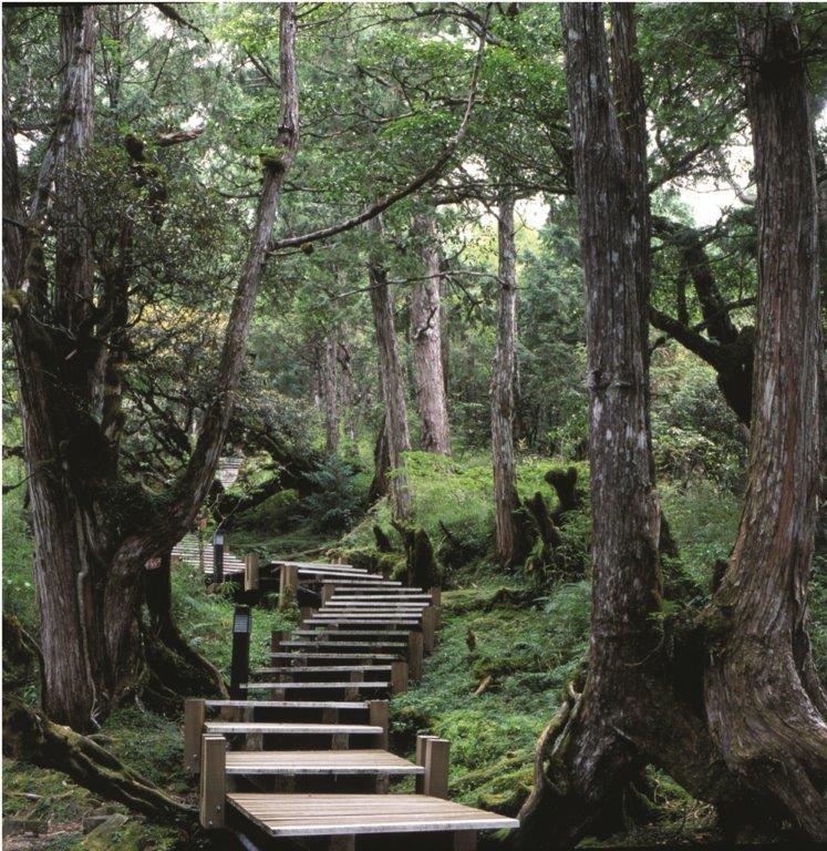 太平山檜木原始林步道。(照片來源:林務局)