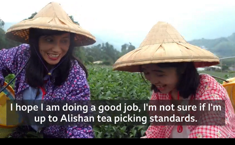 BBC's The Travel Show introduces the tea fields near Alishan (photo courtesy of BBC The Travel Show).