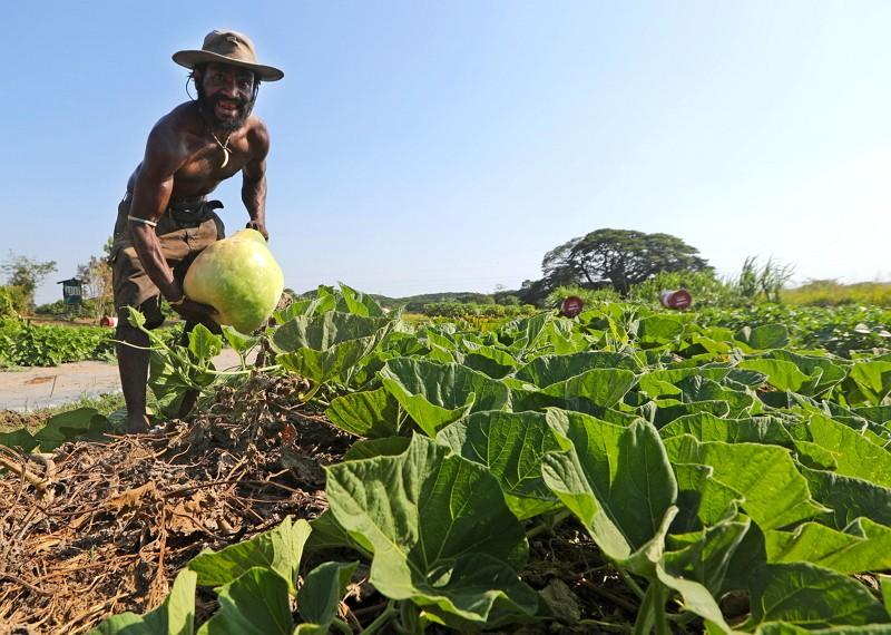 台灣技術團與巴紐農業試驗所合作,開闢2公頃農地,種植多種蔬菜做為示範農地。