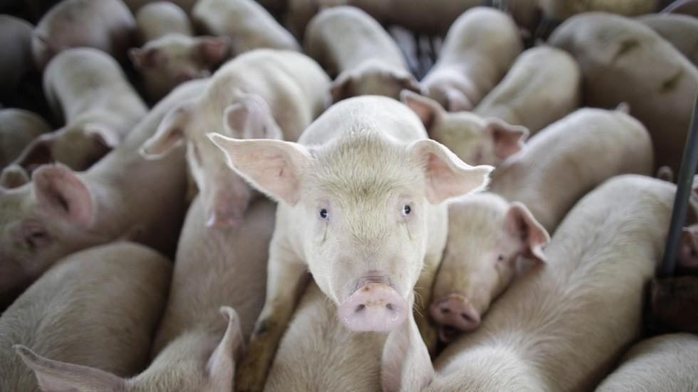 Taiwan slaps ban on Japanese pork imports.