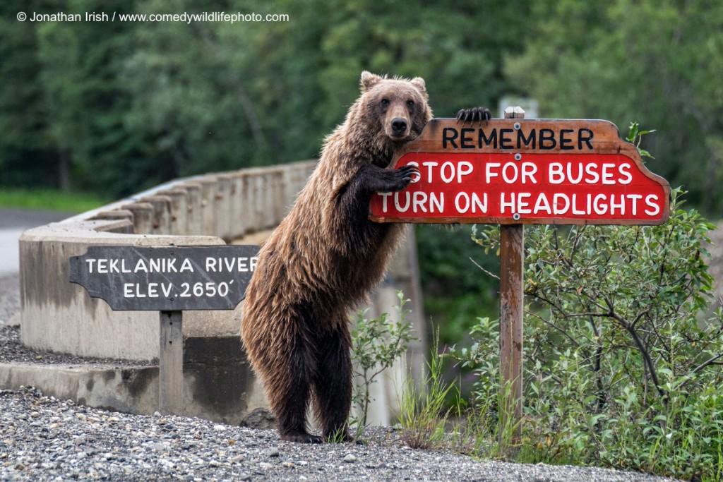 Jonathan Irish / Comedy Wildlife Photography Awards